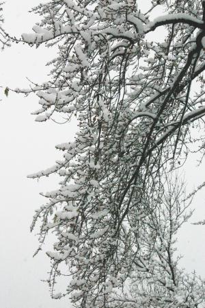 snow dec 3