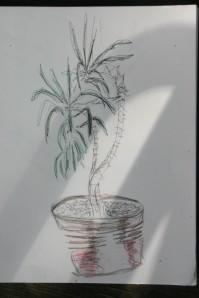 Coco's plant